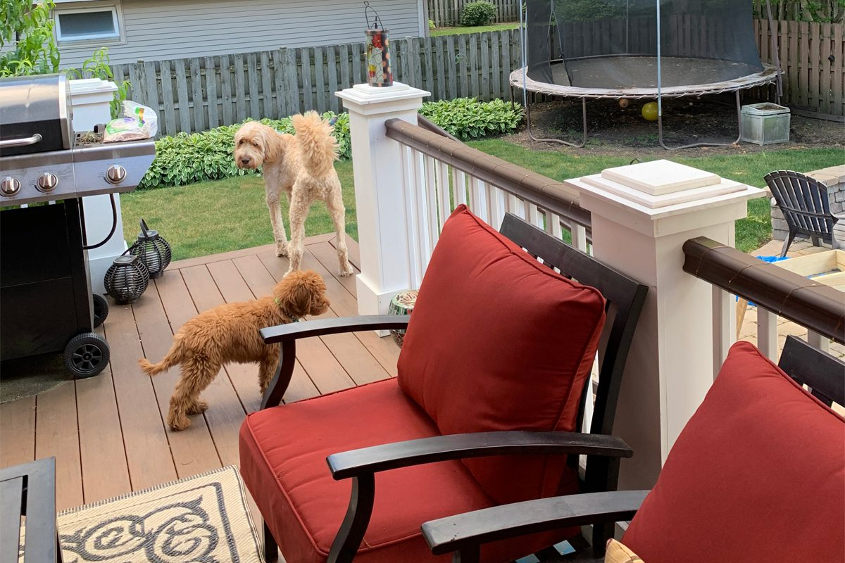 Outdoor deck with two doodle dogs in background, one smaller