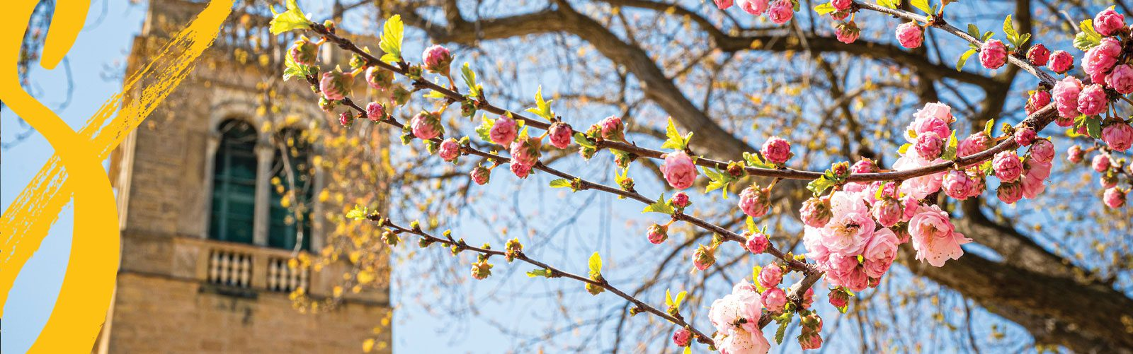 Blossoming tree near Carillon Tower